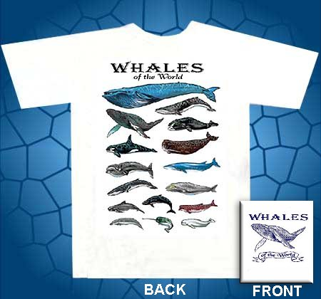 whales of the world screenprinted t-shirt, blue whale, humpback whale, killer whale, sprem whale, gray whale, right whale